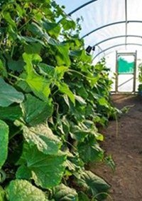 The Allotment Project Polytunnel