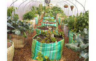 Best Polytunnel for Allotments