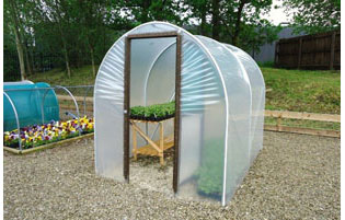 Polytunnel Growing Ideas