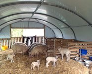 18ft Wide Sheep House