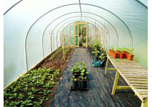 Dream Polytunnels
