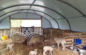 Sheep House Polytunnel