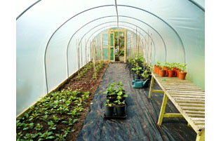 Polytunnel in Spring
